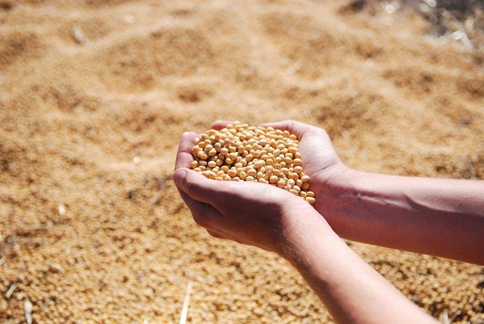 Aplicação de níquel propiciou elevação em 9% do teor de proteína nos grãos (foto: Pixabay)