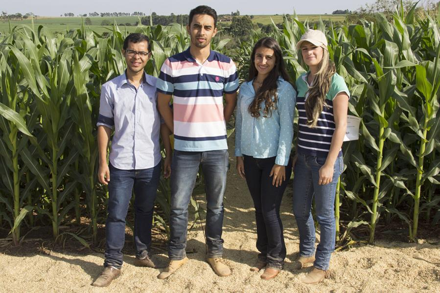Acadêmicos do 6º período na cultura do milho