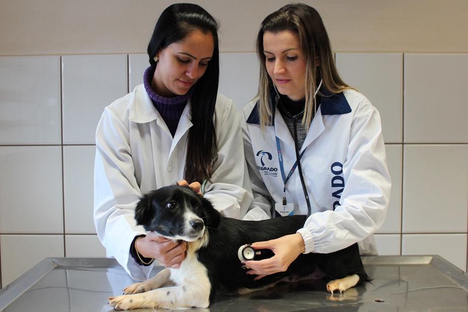 Hospital oferece atendimentos para animais de companhia, de grande porte e silvestres